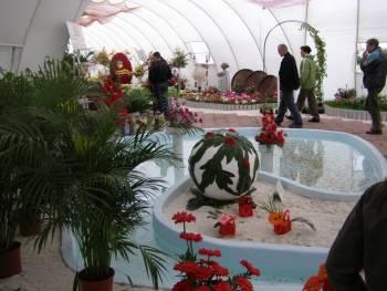 флора 2008
