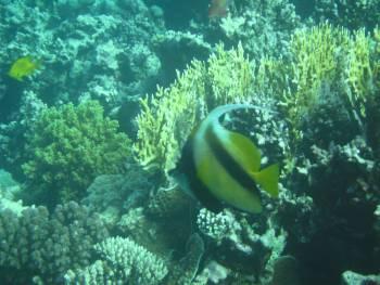 Подводен свят
