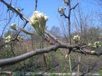 Пролет преди листата