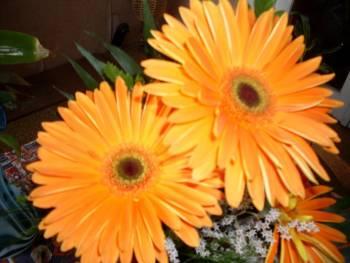 моите цветя